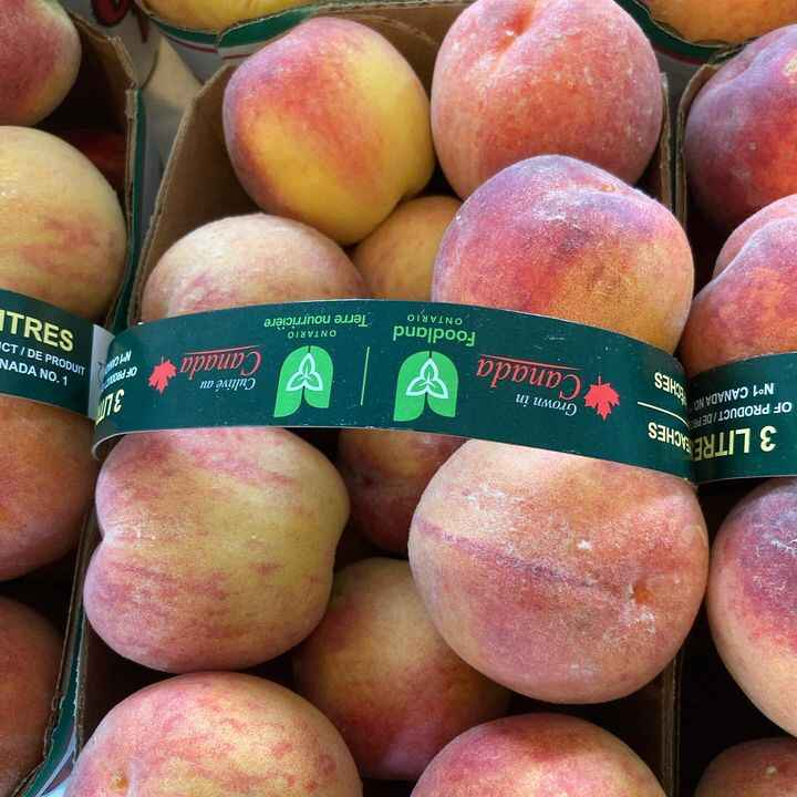 Peaches and Plums are back!!!Both are from the Niagara area.Snow and Shell peas are back as well! Our third patch is com...