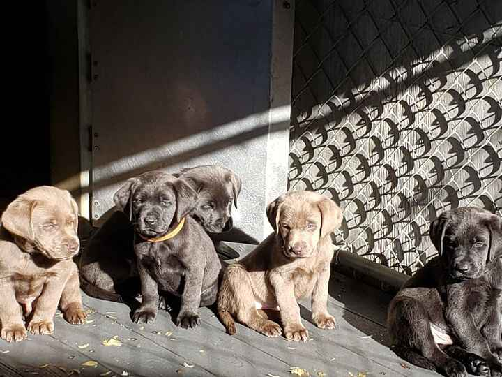 Many thanks to our new puppy families.  All 8 pups have departed to their new homes.  Miss you all, little babies!