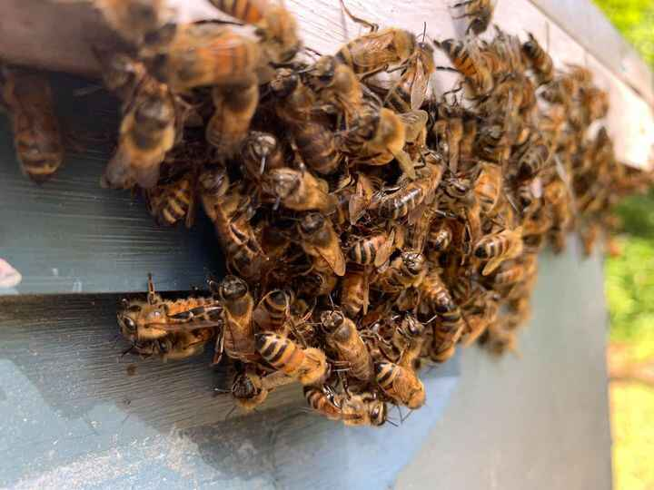 Photos from The Brush Creek Bee Farm's post
