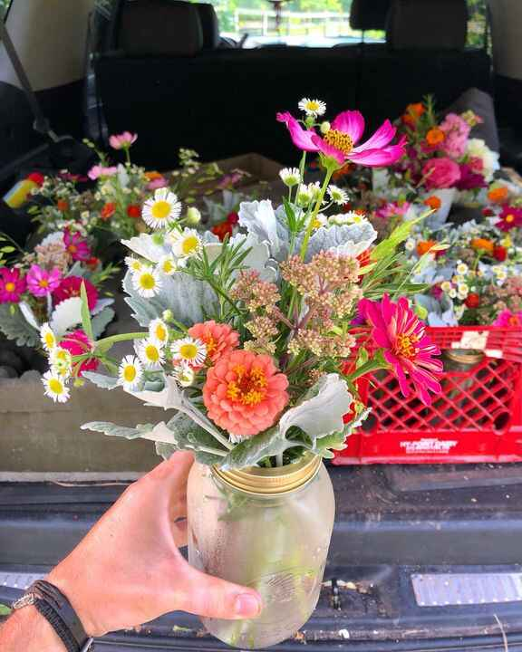 Pampering my July CSA flower bouquet members with gorgeous Zinnia, Cosmos, and elegant Dusty Miller infused mason jar ar...
