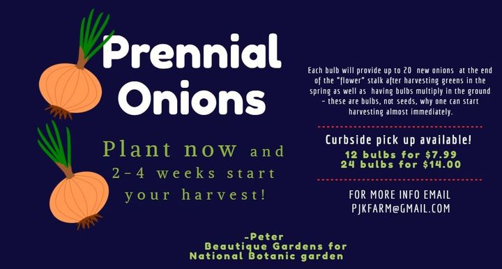 Do you like scallions (or chives) ? -  green onion garnish for cooking frying or yummy salads?  If so, now is the time t...